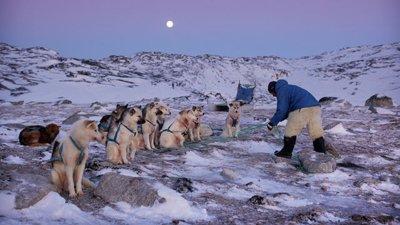 Arctic - Life in the Deep Freeze