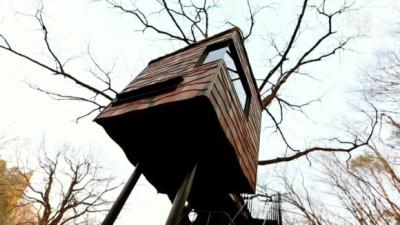 Treehouse Masters International: Japan