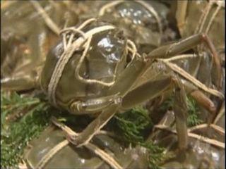 Chen vs Sugita Tadashi (Shanghai Crab)