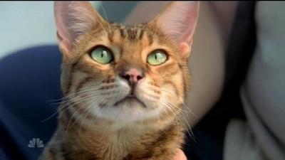 Larceny of a Kitty Cat