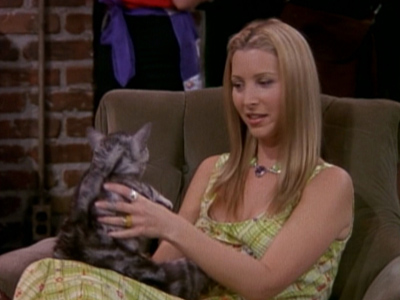 The One With The Cat
