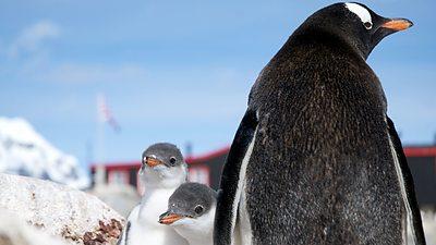 Penguin Post Office