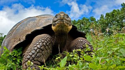 Galapagos: Islands of Change