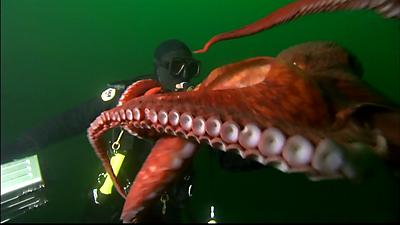 Encountering Sea Monsters