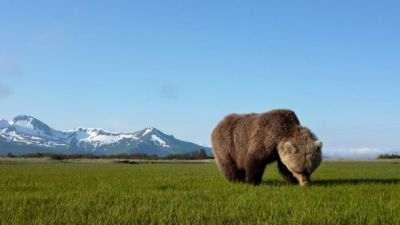 Bears of the Last Frontier: City of Bears