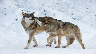 Love in the Animal Kingdom