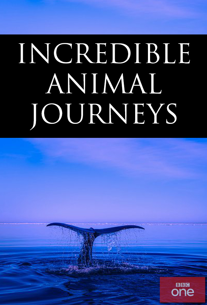Incredible Animal Journeys