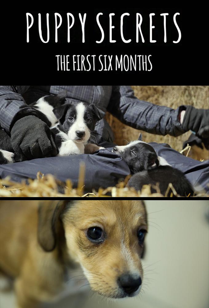 Puppy Secrets: The First Six Months