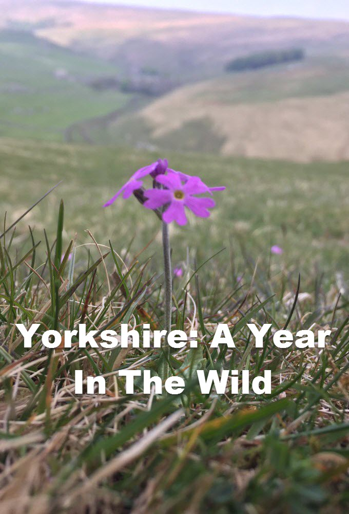 Yorkshire: A Year In The Wild